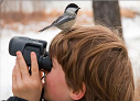 Наблюдаем птиц